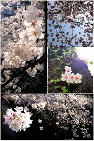 2014-04-01-18-53-40_deco.jpgのサムネイル画像