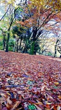 16-11-25-14-18-49-271_deco.jpgのサムネイル画像